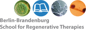 Berlin-Brandenburg School for Regenerative Therapies Logo